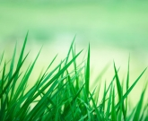 农用机械默认文章标题内容信息