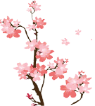 7   櫻花