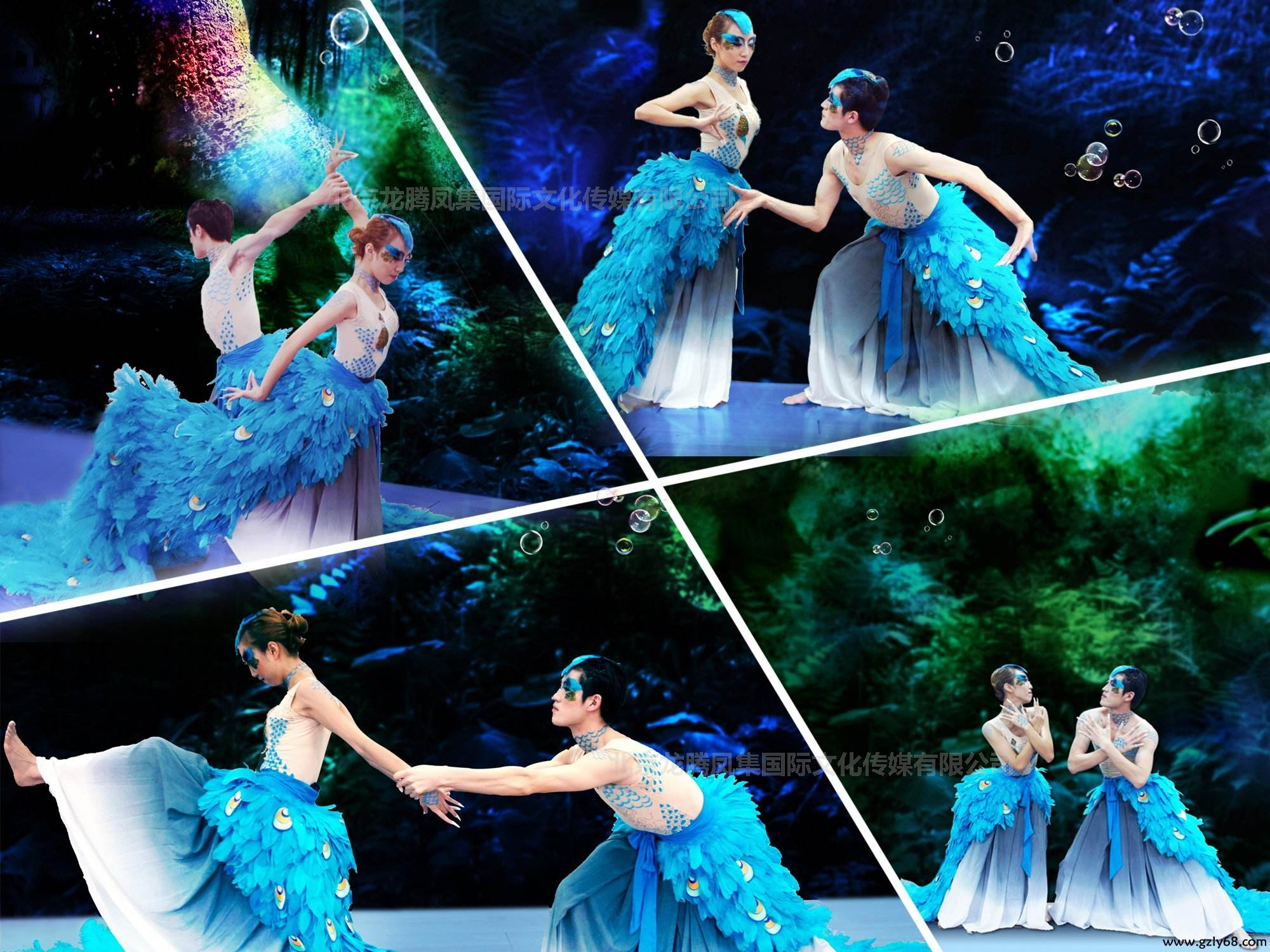 雀之恋舞蹈
